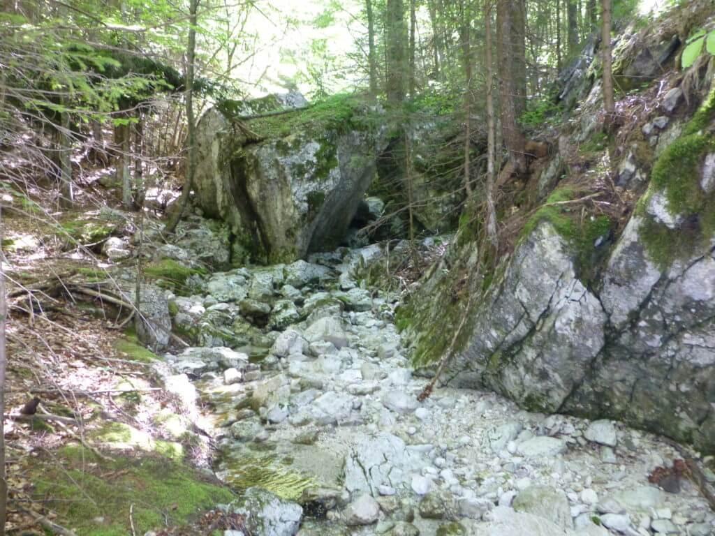 AAT_Alpe-Adria-Trail_Waldweg und Felsen