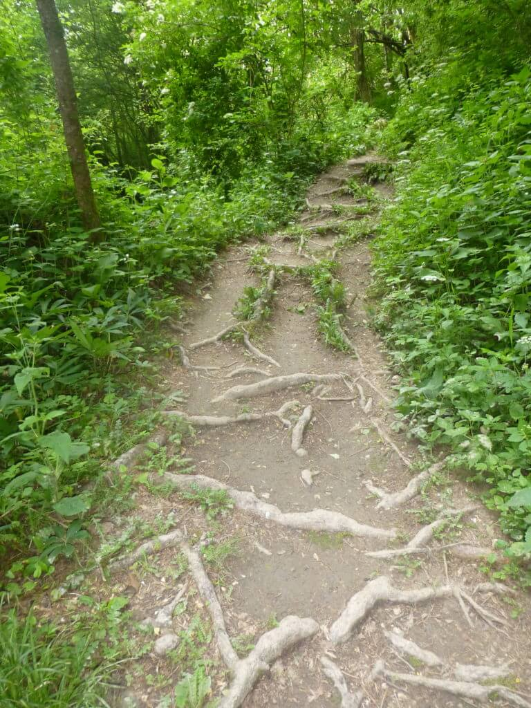 AAT_Alpe-Adria-Trail_Waldweg mit Wurzeln
