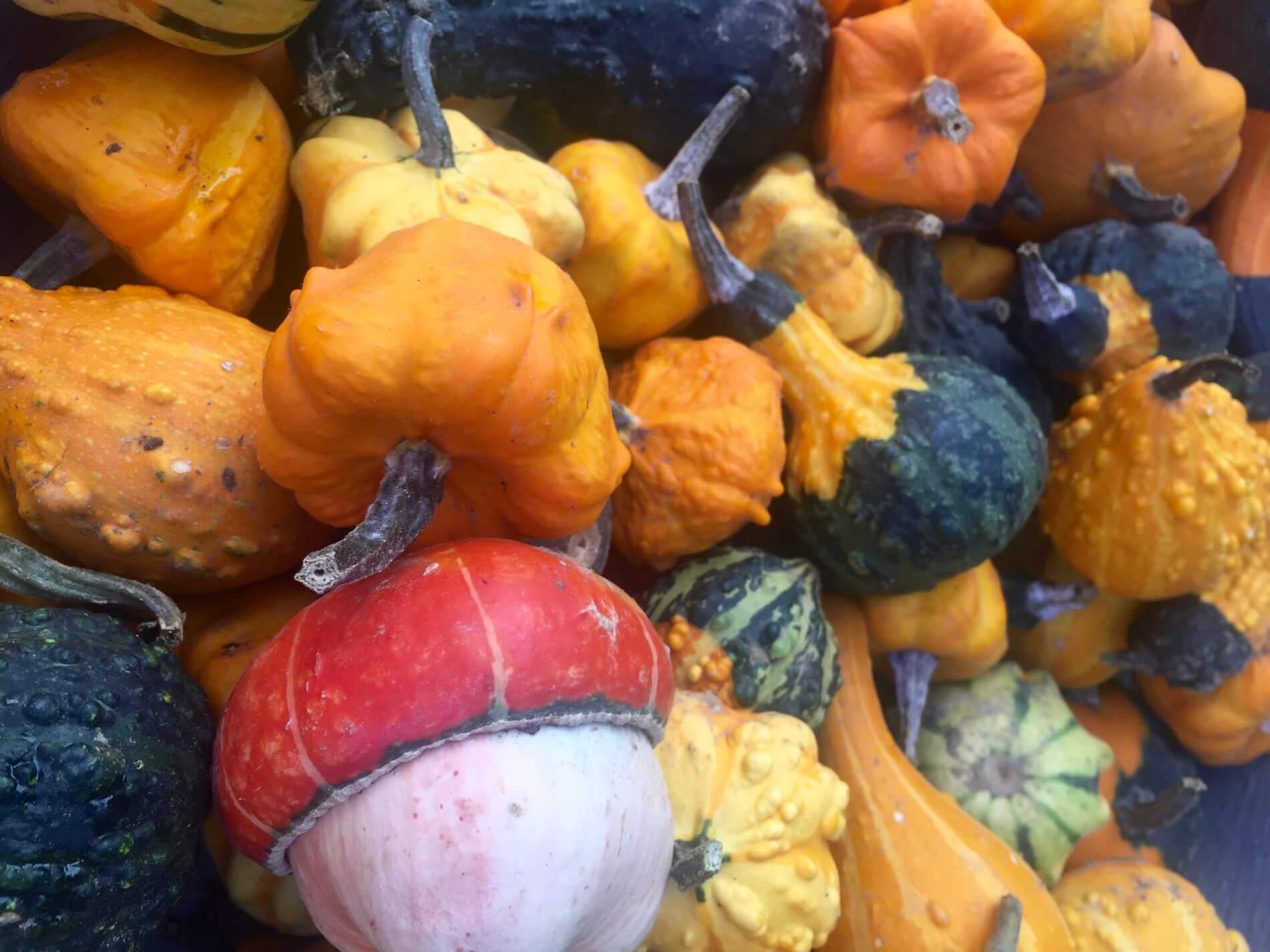 Herbstwanderung Holnis_Kürbisse am Hofladen