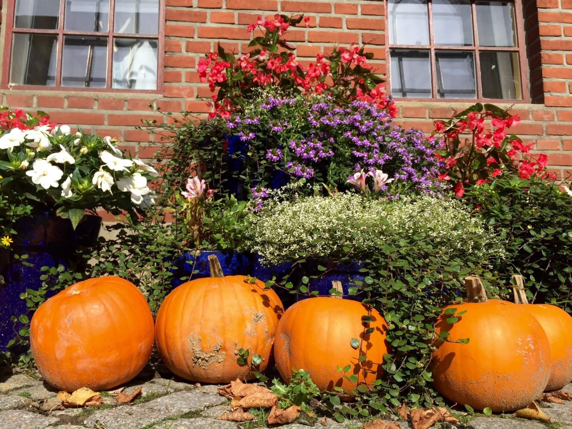 Herbstwanderung Holnis_Kürbis am Hofladen