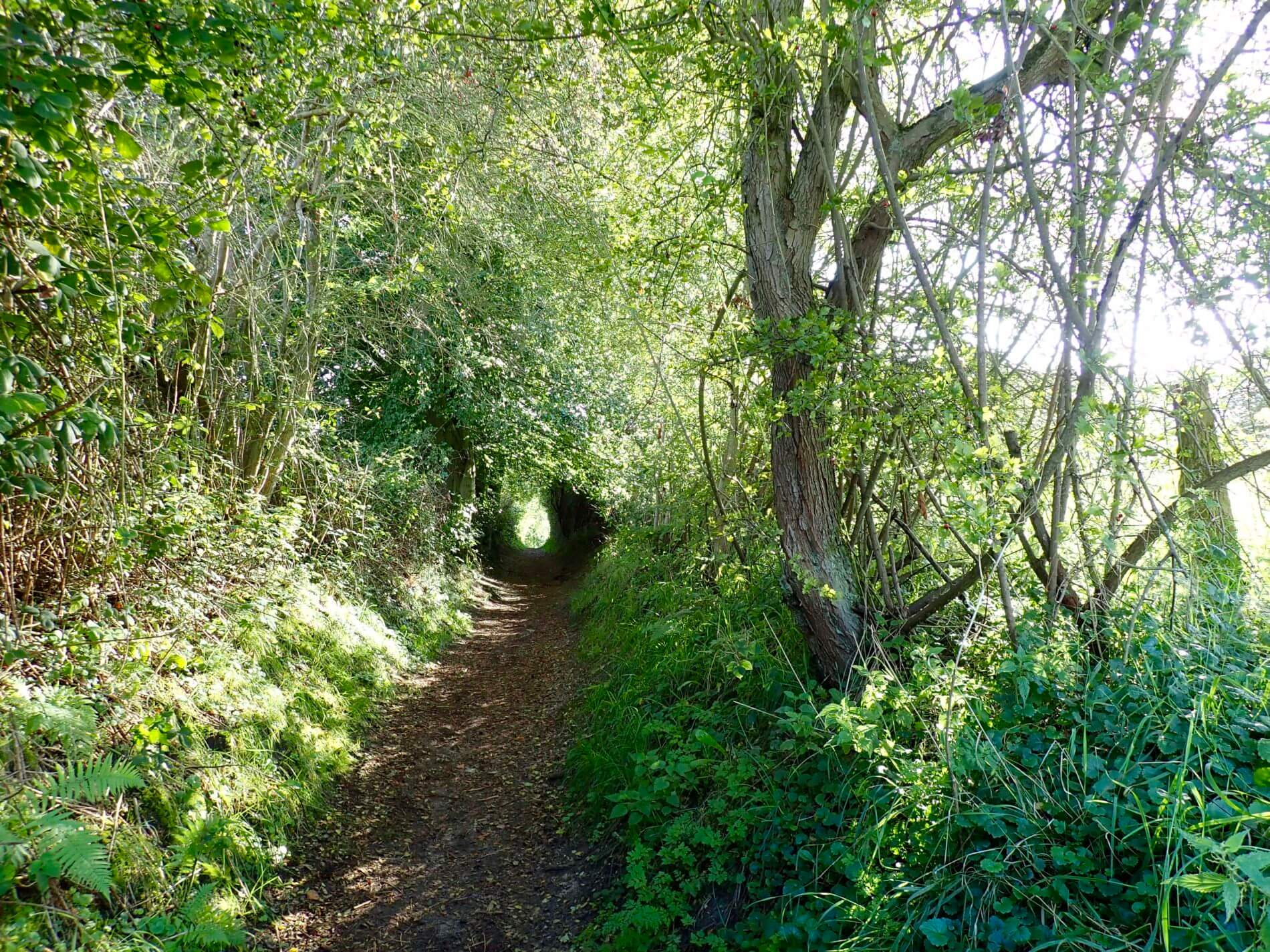 Herbstwanderung Holnis_Blättertunnel