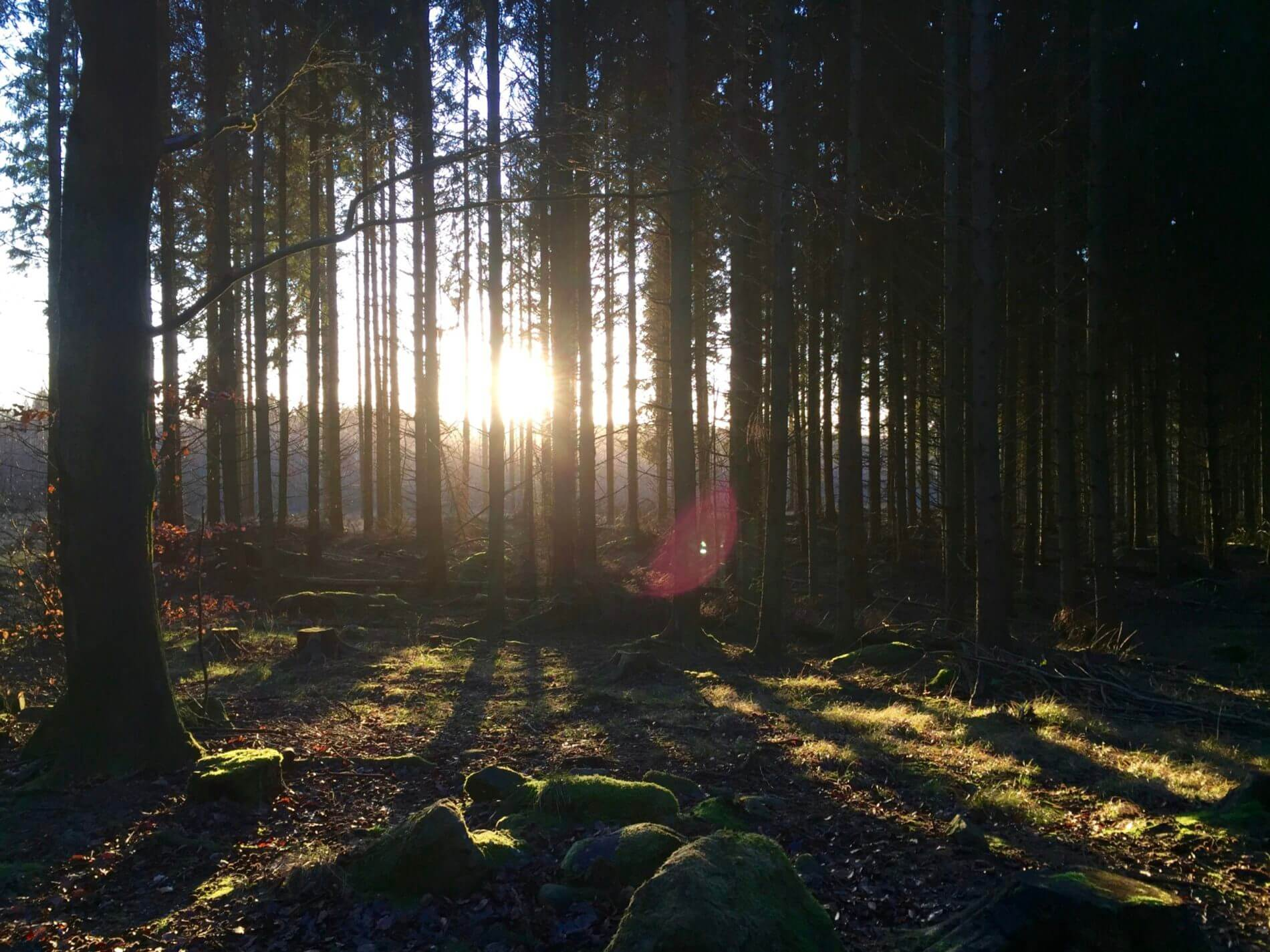 Skrylle_Wald im Winterlicht