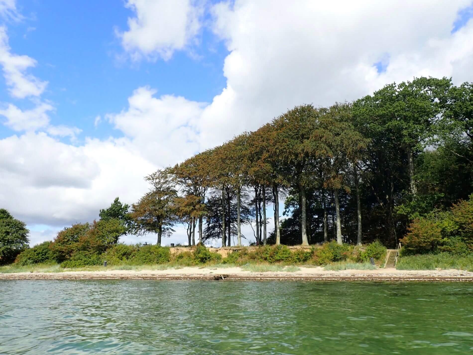 Im Kajak um Alsen_Steilküste mit Bäumen