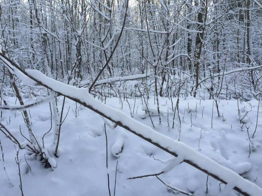 Karlumer Forst im Winter_Schnee