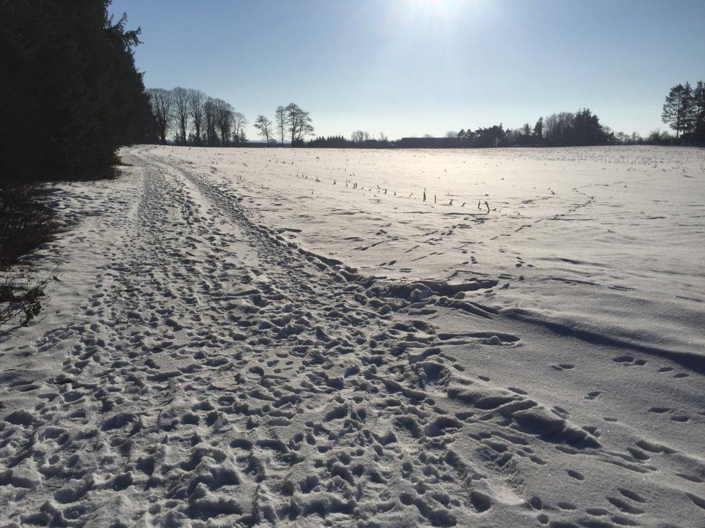 Winter bei Enge-Sande
