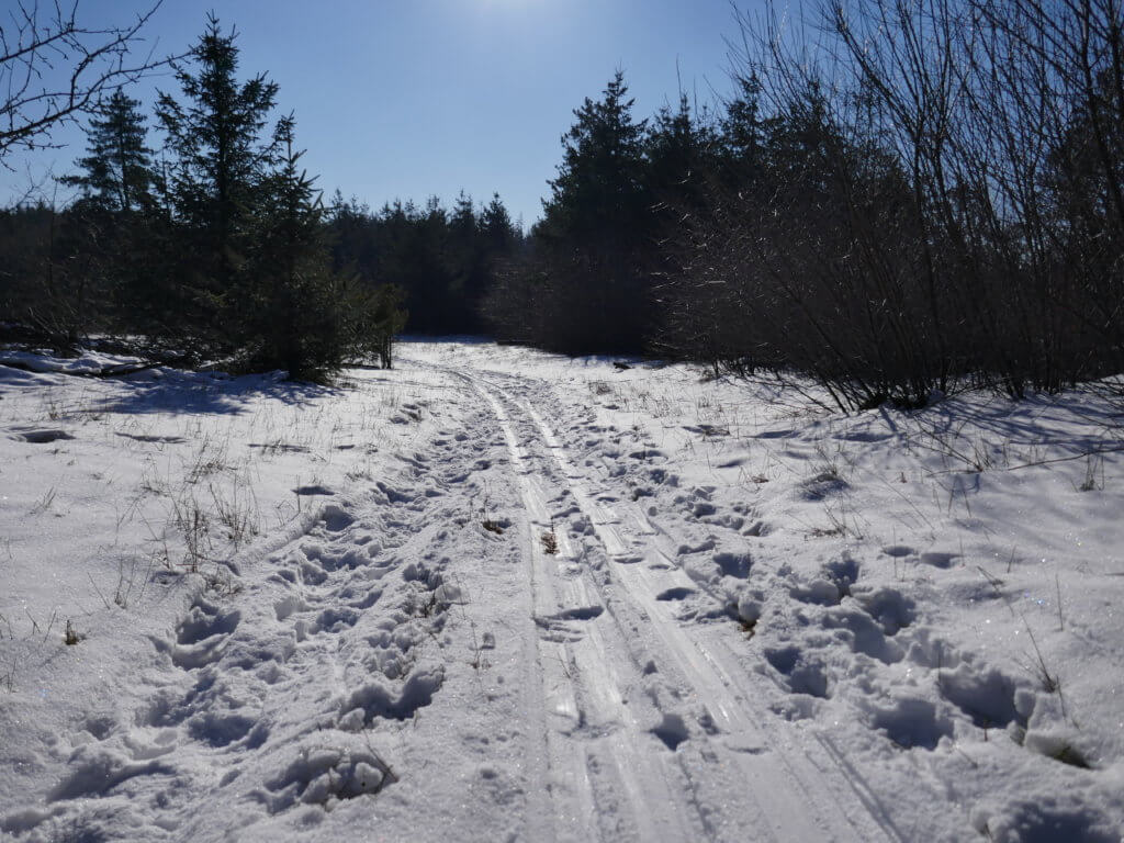Langlaufspur im Langenberger Forst