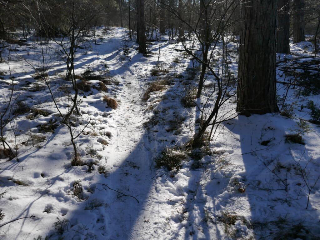 Winterwandern im Langenberger Forst