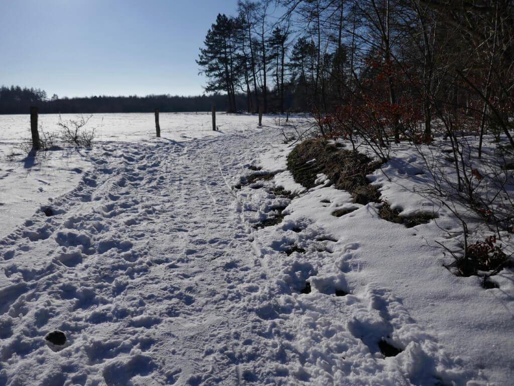 Langenberger Forst_Schnee und Sonne