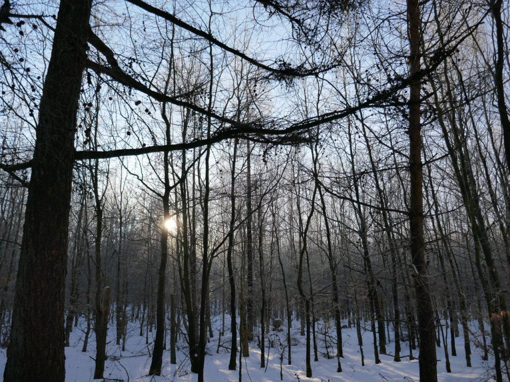 Waldmorgen