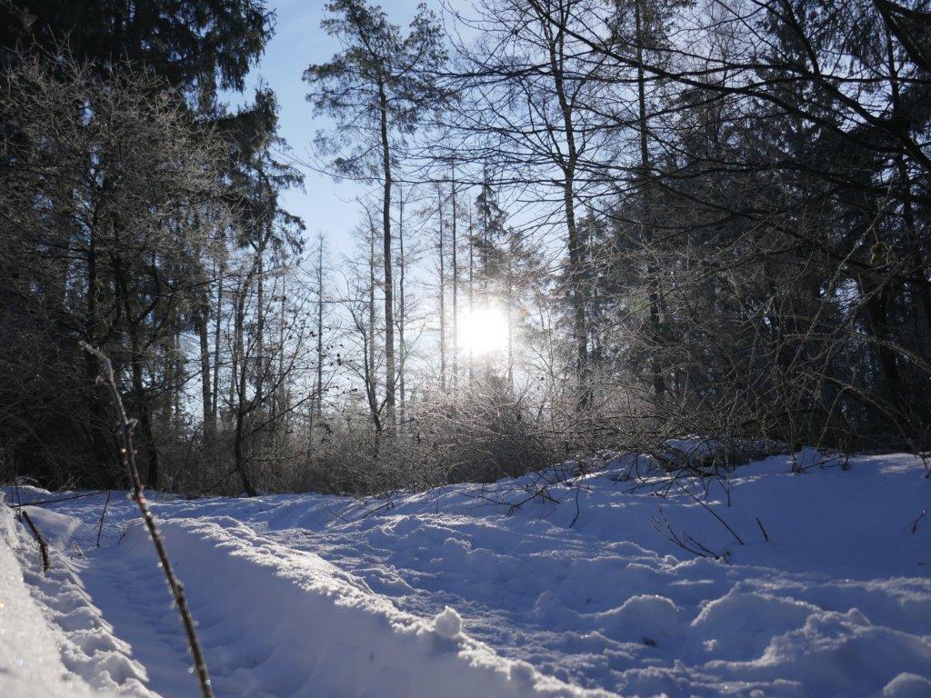 Langenberger Forst im Winter